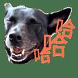The best black dog