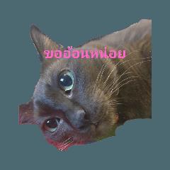 Eskimo's Cat