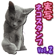 Cat Sticker Russian Blue 2