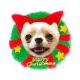 Chihuahua's latte Christmas & New year