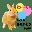 Rabbit MALU3