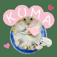 Kuma happy