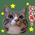 かわいい猫 リオ君2