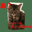❤︎ウチの11にゃんず&保護猫はっちゃん❤︎