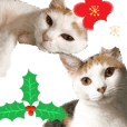 cat Sticker for X'mas and New Year