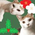 猫の写真スタンプ クリスマス&お正月編
