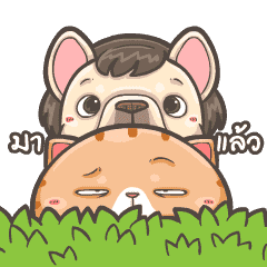French Bulldog PIGU & Cat King MI-PON