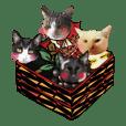 OSECHI FAMILY