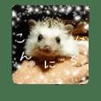 LovelyHedgehog Rin2