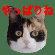 かわいい三毛猫さん