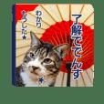 猫のナナゴン(了解・有難う・お休み1)