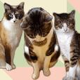 色んな意味で使えそうな猫写真スタンプ