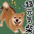 A cheerful Shiba Inu