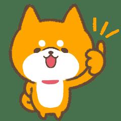 Fluffy Shiba inu animated