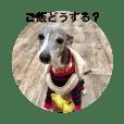 Italian Greyhound  peach Healing stamp 1