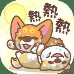 柯基犬椪椪&柴柴夏日炎炎