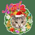 三毛猫ももちゃんのクリスマス