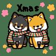 Shiba Maron & Momo (Xmas)