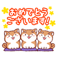 Shiba Inu celebrating