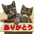 reo&Quu CAT Sticker