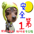 Little P Dog-3