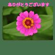 ありがとう花