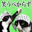 笑える猫写真❤ノワール城の仲間達
