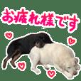 Heartwarming Labrador & Rottweiler