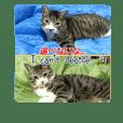 保護猫のナナゴン (ごちゃまぜ2)