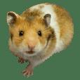 黄色のマウス