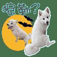 Fox dog Xiang Xiang & friends