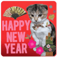The New Year's volume of calico cat MOMO