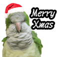Merry Xmas from the cutest monk parrot!