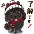 Black Pomeranian Winter