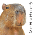 Capybara of Kapi-chan 5 (Butler version)