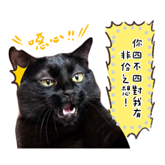 我是白吉-真貓版訊息貼圖