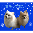 pomeranian Leo and max9 winter sticker
