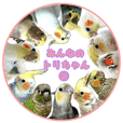 Everyone's bird is Cawaii! vol.2