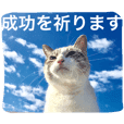 cats&sky message