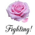 falling rose petal