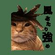 HACOMARU CAT