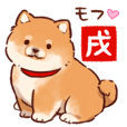 Soft and cute shiba inu