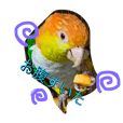 birdfamily