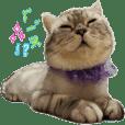 Cat Gofy