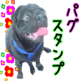 Pug dog Sticker-1