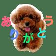 Momo Tanuki  2