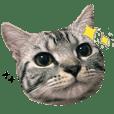 cat cat cat QQ