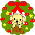 "toy poodle ""Milk chan"" Xmas and New Year"