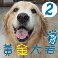 Golden Retriever Story 2