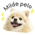 Looking at Pomeranian Milde